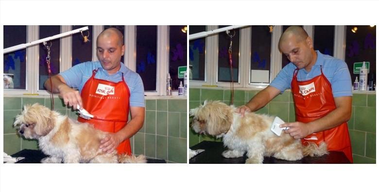 Njega pasa - šišanje, kupanje, trimanje, rezanje noktiju - slika 2