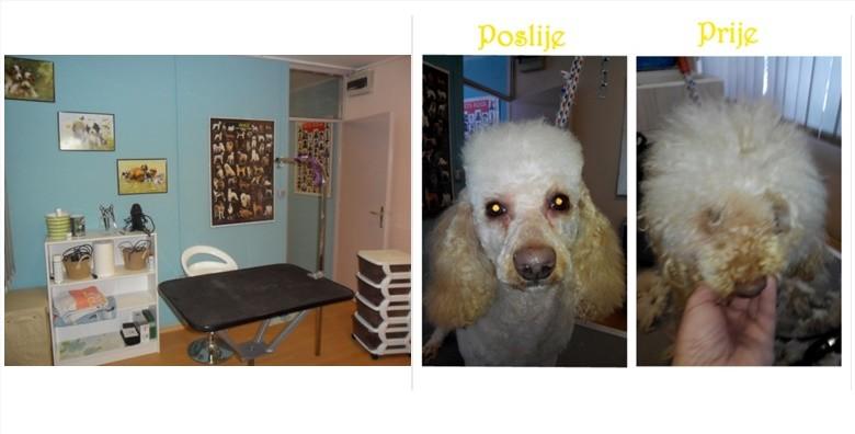 Njega pasa - šišanje, kupanje, trimanje, rezanje noktiju - slika 3
