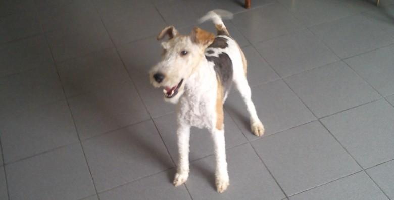 Njega malih i srednjih pasa - slika 3
