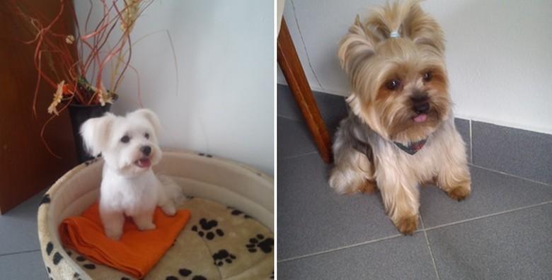 Njega malih i srednjih pasa - slika 9