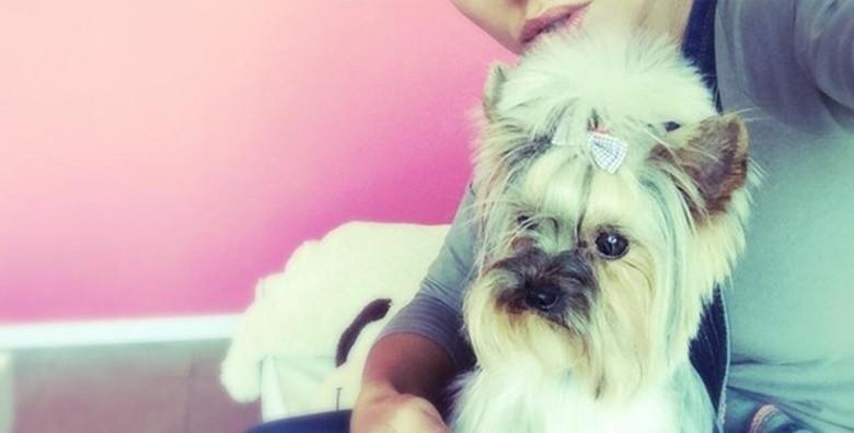 Deluxe tretman za male pse - slika 5