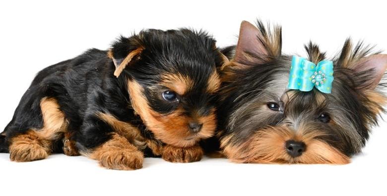 Deluxe tretman za male pse - slika 8