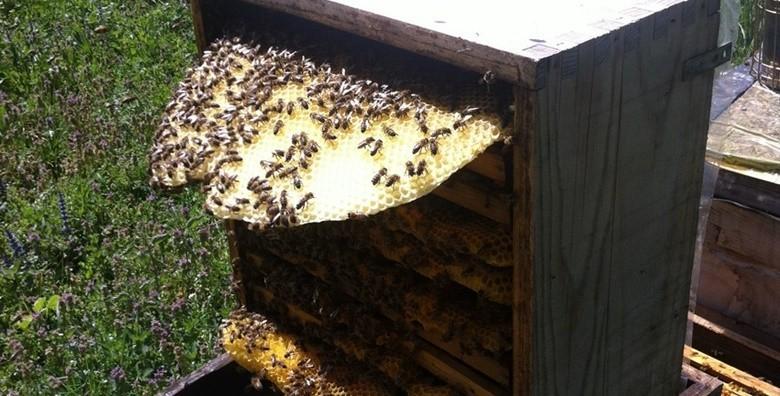 Krema od smilja, ulje lavande, pčelinji balzam i melem - slika 3