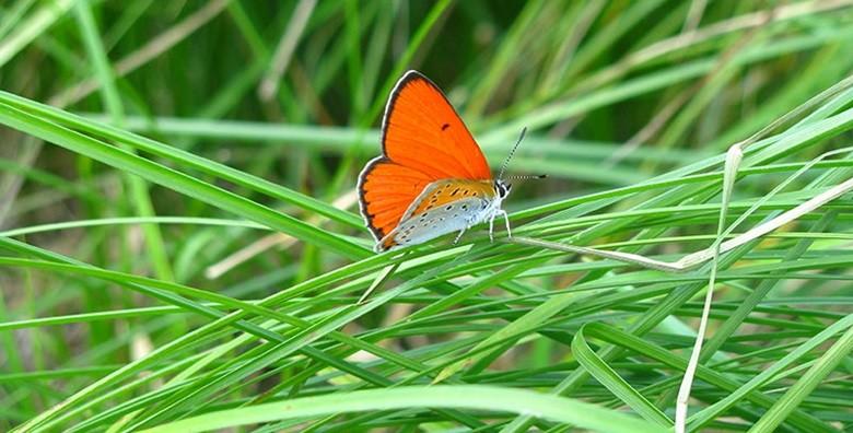 Park prirode Papuk - izlet s ulaznicom i prijevozom - slika 11