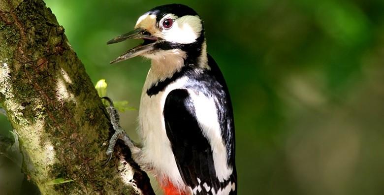 Park prirode Papuk - izlet s ulaznicom i prijevozom - slika 9
