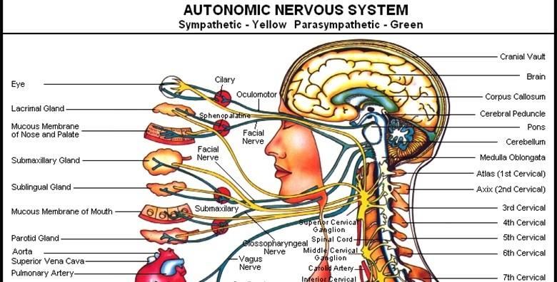 Kiropraktički tretman, pregled, konzultacije - slika 5
