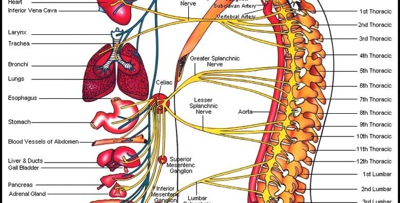 Kiropraktički tretman, pregled, konzultacije - slika 6