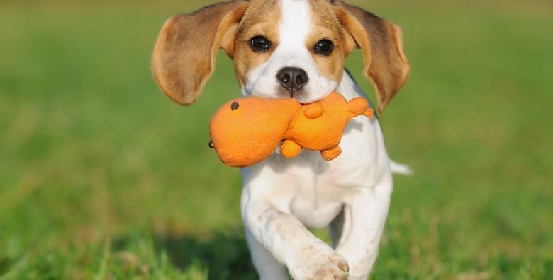 Kupanje i šišanje za male pse do 10kg