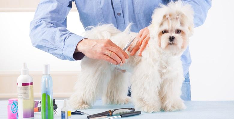 Tečaj šišanja pasa - bez fiksnih sati, dok ne naučite sve!