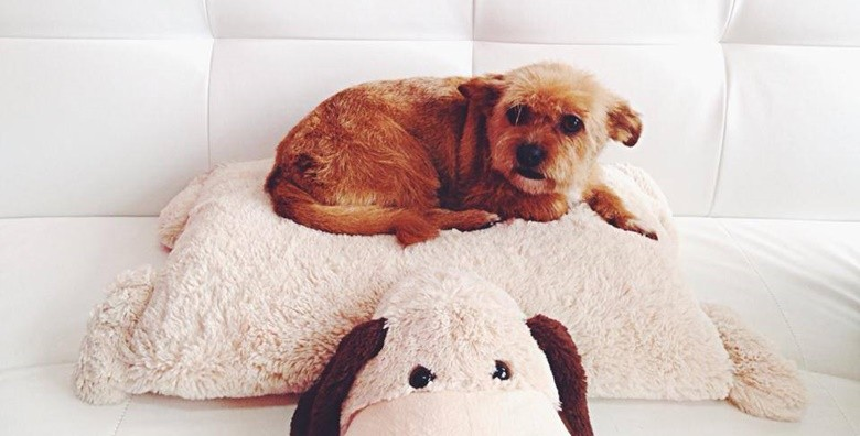 Deluxe tretman za male pse - slika 2