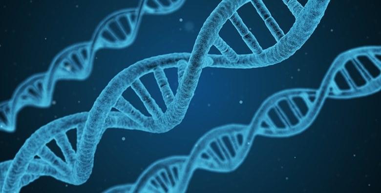 NLS analiza kromosomskog sustava