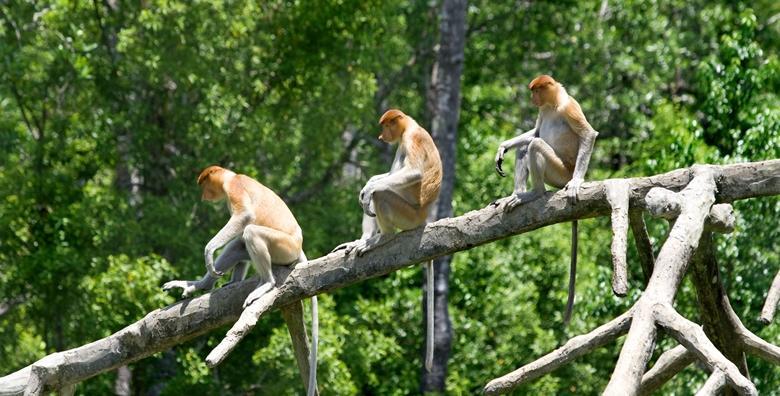 [AUSTRIJA] Posjetite bajkovitu Korušku, uživajte u druženju s makaki majmunima te razgledajte gradiće Velden i Villach - izlet s prijevozom za 179 kn!