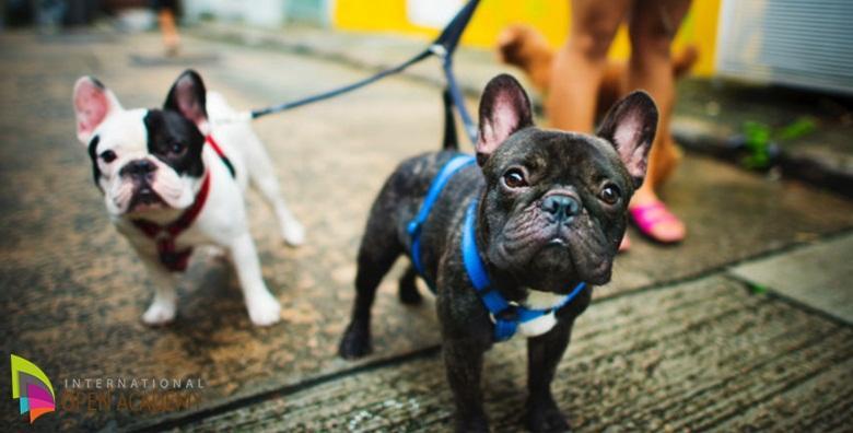 [DRESURA PSA] Učinkovita video obuka za dresiranje i postizanje snažne povezanosti sa psima bilo koje dobi! Tečaj osnovne dresure psa za samo 39 kn!