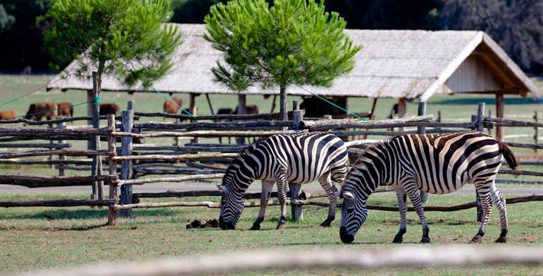 [NP BRIJUNI] Provedite Prvi maj u istraživanju safari parka i uživanju u prekrasnoj prirodi uz razgled Pule za 229 kn!