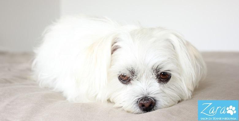 [NJEGA PASA DO 15 KG] Kompletan tretman za kratkodlake i dugodlake pse uz kupanje, šišanje, čišćenje ušiju i skraćivanje noktiju za 99 kn!